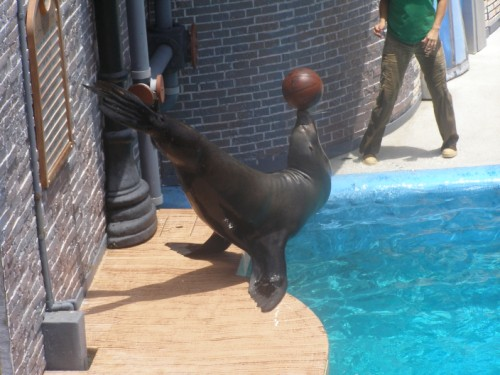 Seal balancing basketball