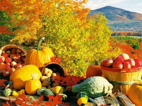 Fall Harvest and leaves Photo