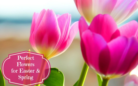 tulips2 The Perfect Easter Flowers   A Guide