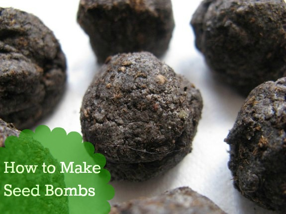 seed bombs How to Make Seed Bombs