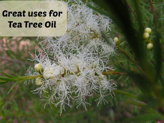 Great uses for Tea Tree Oil