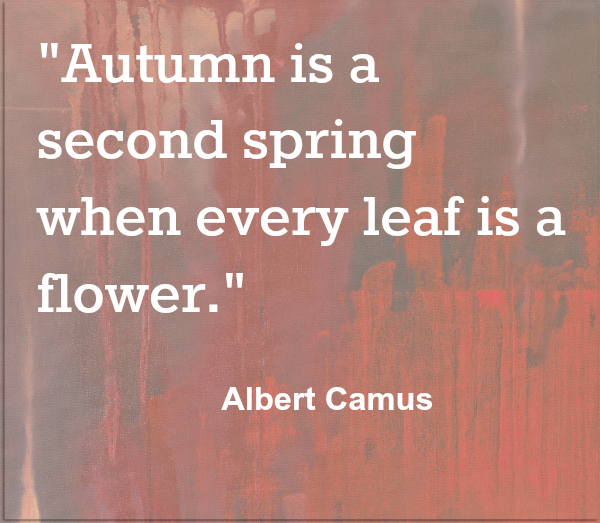 Autumn is a Second Spring Albert Camus quote