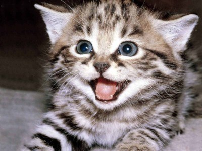 happy kitten kittens 5890512 1600 1200 (400 x 300) Giveaway Roundup   Mothers Day Edition
