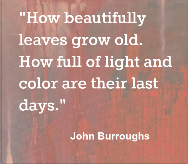 Beautiful Leaves John Burroughs Autumn Quote
